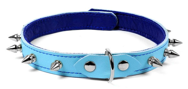 custom collar-blue with spikes